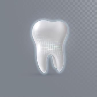 Dente 3d realistico con struttura wireframe lucida isolata