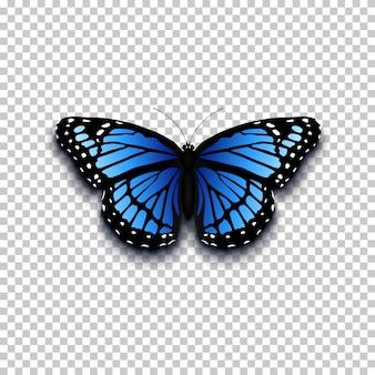 Icona della farfalla realistica. perfetto per la tua presentazione.