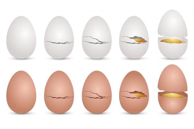 Illustrazione realistica di progettazione dell'uovo di pollo isolata su fondo bianco