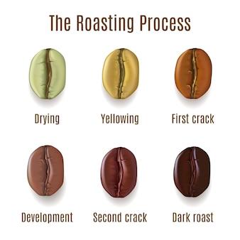 Chicchi di caffè realistici isolati su priorità bassa bianca. fasi dell'illustrazione del processo di tostatura