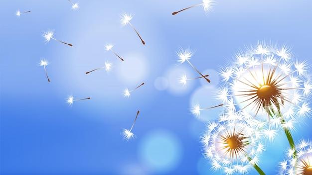 Dente di leone realistico. fiore bianco soffice, semi volanti sul cielo blu