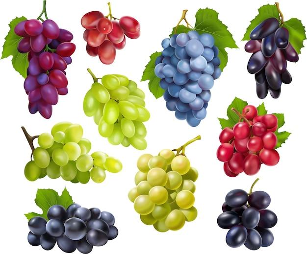 Set di uva realistica. raccolta di realismo stile disegnato 3d vari rami di verde blu
