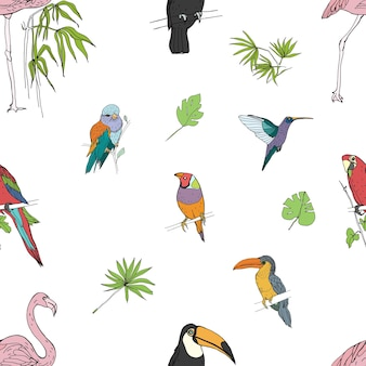 Modello senza cuciture colorato disegnato a mano realistico di bellissimi uccelli tropicali esotici con foglie di palma. fenicotteri, cacatua, colibrì, tucano, pavone.