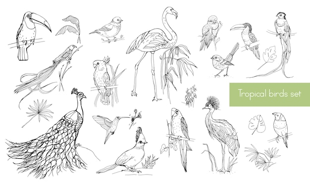 Collezione di contorni disegnati a mano realistici di bellissimi uccelli tropicali esotici con foglie di palma. fenicotteri, cacatua, colibrì, tucano, pavone.