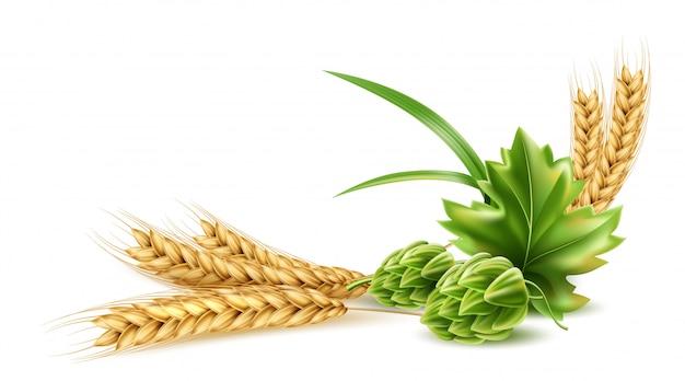 Cono di luppolo realistico con foglia verde, grano