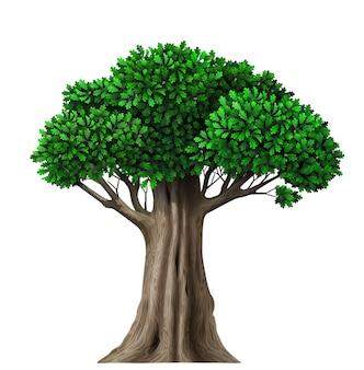 Fata isolata realistica con foglie. pianta con fogliame verde. natura ed ecologia della foresta
