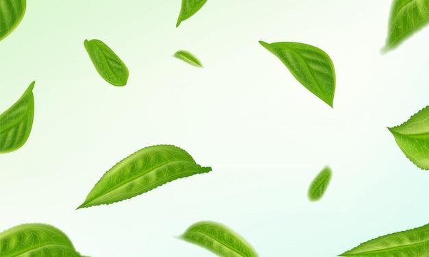 Foglie di tè isolate realistiche che circondano fondo