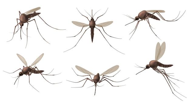 Set di zanzare realistico