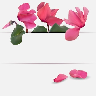 Fiore di ciclamino naturale realistico