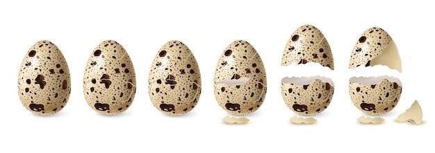 Set di uova di quaglia realistiche incrinate e aperte illustrazione isolata