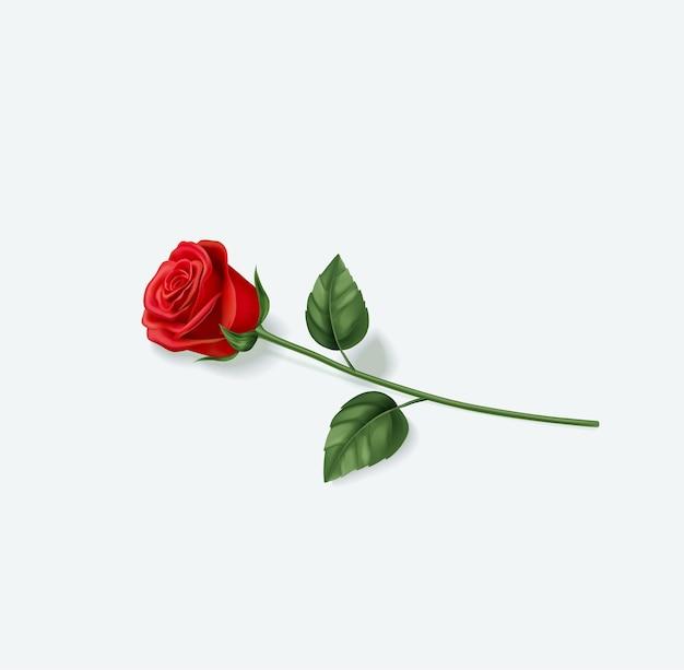 Rosa rossa realistica