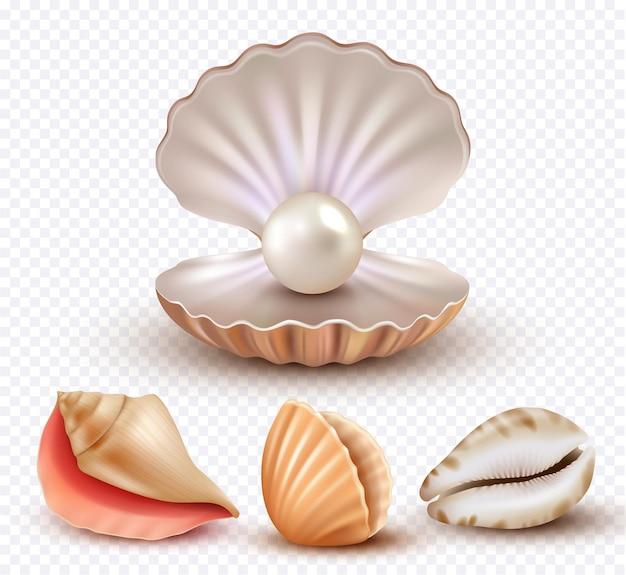 Conchiglie realistiche. mollusco conchiglie oceano spiaggia oggetti perle di lusso collezione concha aperta.