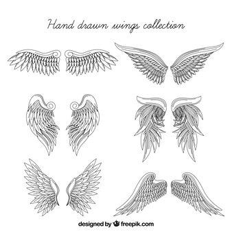 Un insieme realistico di ali disegnate a mano