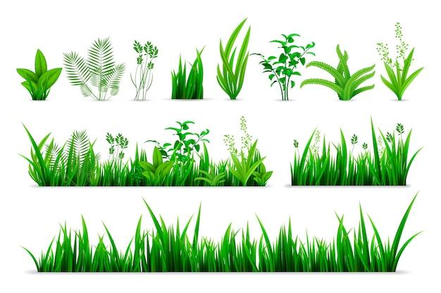 Set di erba primaverile realistico. raccolta di piante fresche verdi disegnate in stile realismo o foglie di erbe botaniche verdi stagionali da giardino