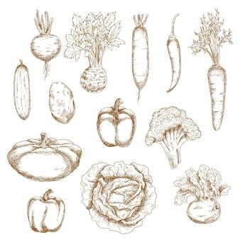 Libro di ricette o utilizzo di design di cibo sano vegetariano