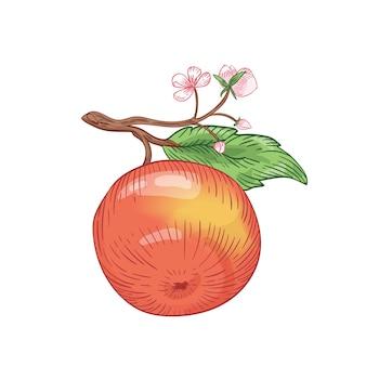 Illustrazione vettoriale disegnata a mano di mela rossa