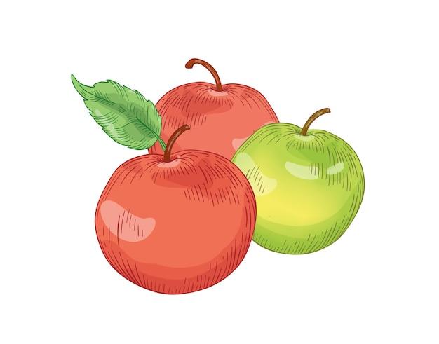 Illustrazione di vettore disegnato a mano di frutta mela rossa e verde. elemento di disegno realistico della composizione di tre mele intere. alimentazione sana, cibo biologico, prodotto ecologico. disegno botanico dettagliato di frutta fresca