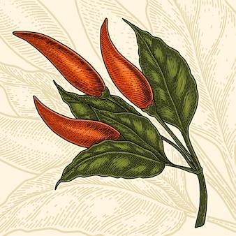 Illustrazione d'annata del disegno della mano del peper di peperoncino rosso