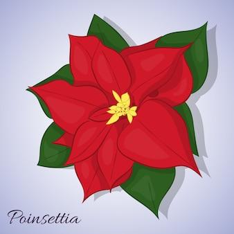 Fiore stella di natale rosso