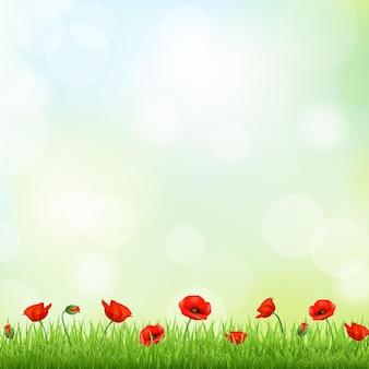 Papavero rosso e bordo erba
