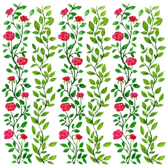 Illustrazione del modello dell'acquerello del fiore della rosa rossa