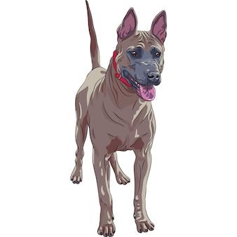 Standing rosso tailandese della razza del cane di ridgeback