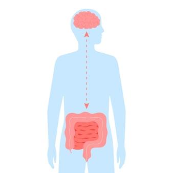 Relazione salute del cervello e dell'intestino connessione intestinale sana del cervello umano e dell'intestino secondo cervello
