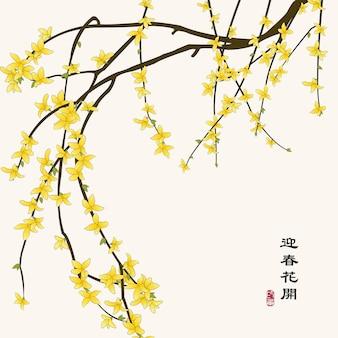 Illustrazione cinese colorata retrò con fiori di gelsomino invernale