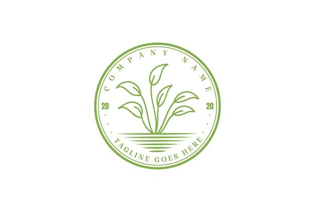 Retro vintage green leaf plant grow natura herbal garden environment logo design vector