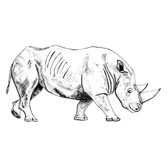 Rinoceronte isolato su sfondo bianco. schizzo animale grafico con savana di corno in stile incisione.
