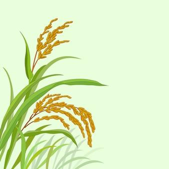 Pianta di riso con risone