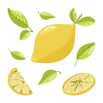 Limone intero maturo con foglie un cerchio di agrumi e una fetta di frutta illustrazione vettoriale disegnata a mano