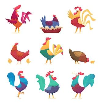 Galli e galline. personaggi dei cartoni animati di vettore di allevamento di uccelli di fattoria di pollo domestico di campagna eco industria di allevamento. gallina e gallo, illustrazione della fattoria degli uccelli di pollo