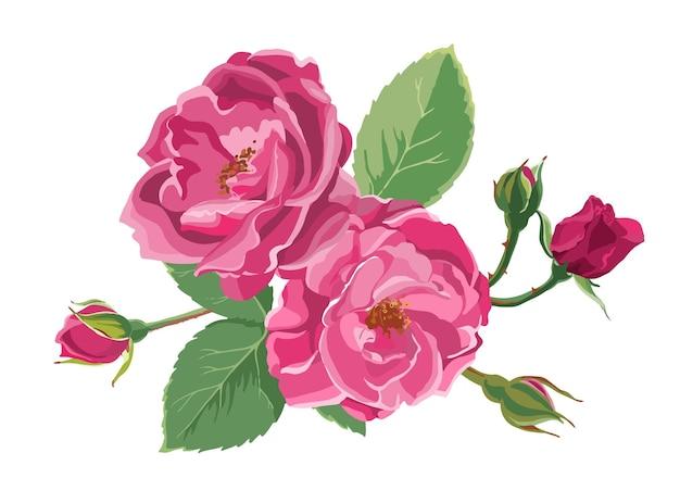 Rose in fiore, fiori rigogliosi con foglie e boccioli. flora decorativa delle peonie isolate. mazzo di composizione fiorista per regalo o regalo per un'occasione speciale. opera d'arte botanica. vettore in piatto