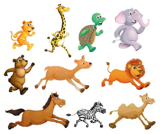 Animali in corsa