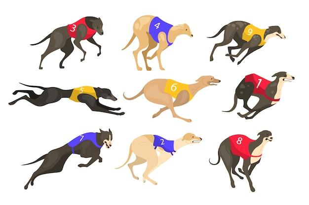 Cane che corre di razza diversa in abito couring. corse di cani. cane sporrt che corre veloce nella competizione di velocità.