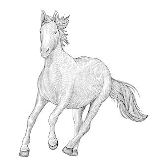 Disegno di cavallo in corsa