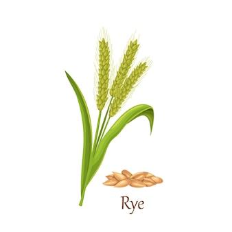 Colture di cereali erba di segale, pianta agricola