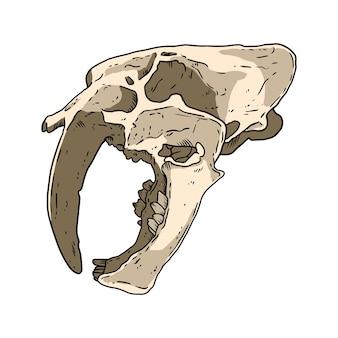 Immagine disegnata a mano del cranio fossilizzato di tigre dai denti a sciabola. grande disegno fossile dell'illustrazione delle ossa feline. sagoma di contorno stock vettoriale isolato su bianco