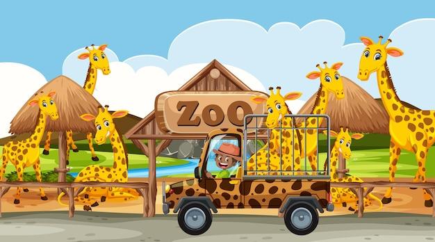 Scena del safari di giorno con un gruppo di giraffe sul camioncino