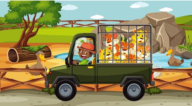 Scena del safari con molti leopardi in un'auto a gabbia