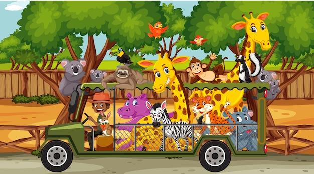 Scena del safari con animali selvatici in un'auto turistica