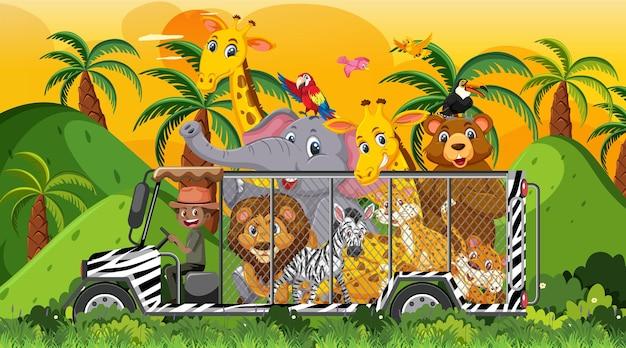Safari al tramonto con molti bambini che guardano gli animali