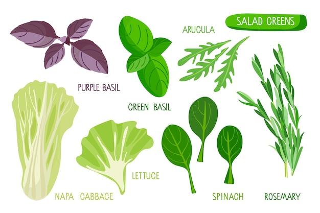 Set di verdure per insalata raccolta di piante fresche con iscrizioni isolate verdura per insalata popolare