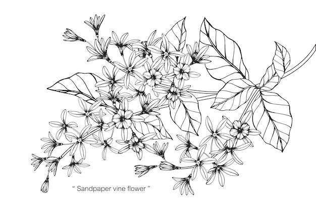 Illustrazione del disegno del fiore della vite della carta vetrata