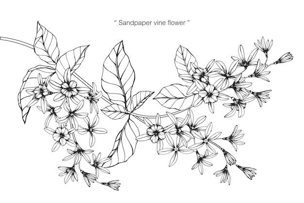 Illustrazione del disegno del fiore della vite della carta vetrata.