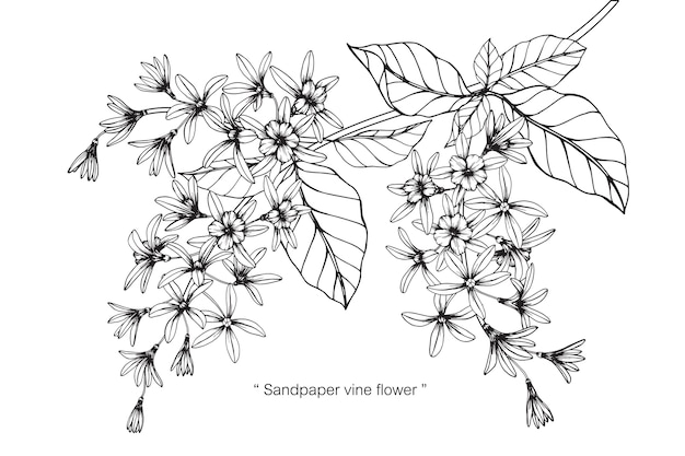 Fiore di vite di carta vetrata