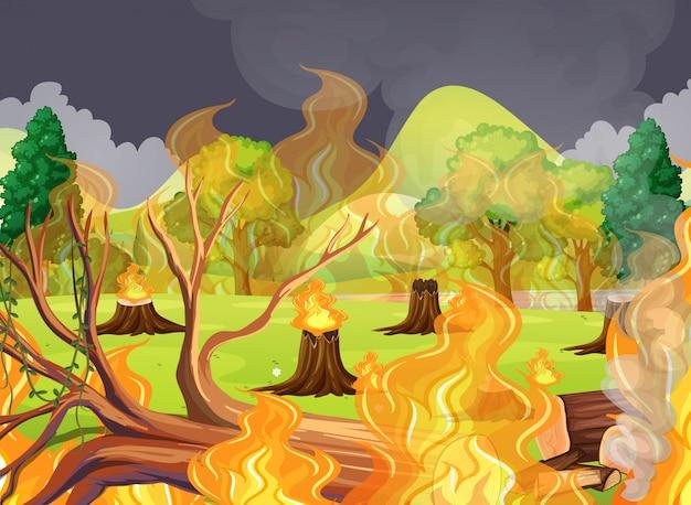 Un incendio spaventoso nella foresta