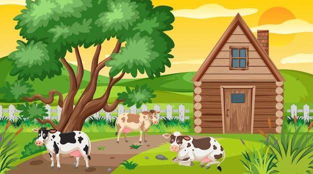 Scena con mucche nel campo del cortile