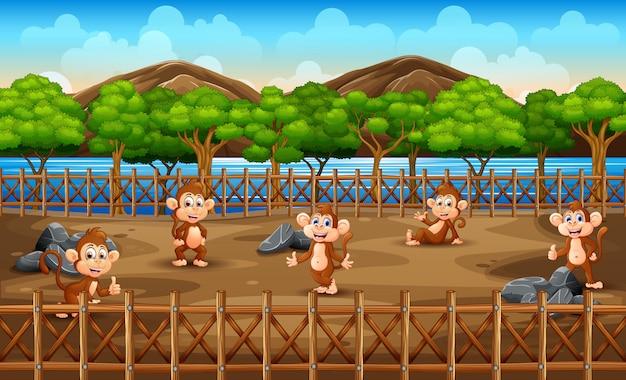 Scena con un gruppo di scimmie allo zoo